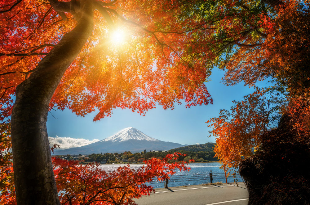 Packing List for Japan in Fall: September, October, November